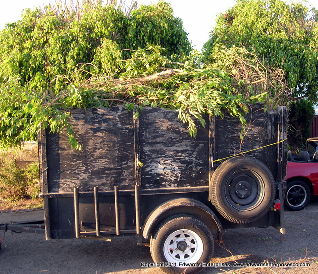 Outdoor Green Waste Hauling like branches, bushes, & plants.