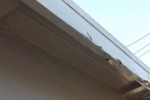 Carpentry Fascia Paint Repair - Carpentry
