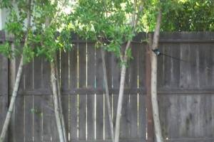 Carpentry Fence Post Repair - Carpentry
