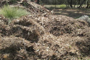 Hauling Yard Waste Debris Cleanup