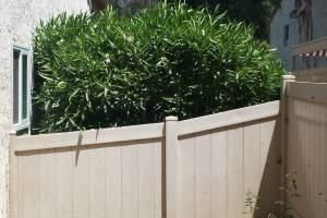 Landscaping Yard Weed Cleanup