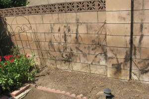 Landscaping Pressure Washing Concrete Wall - Landscaping