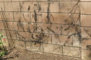 Landscaping Pressure Washing Concrete Wall