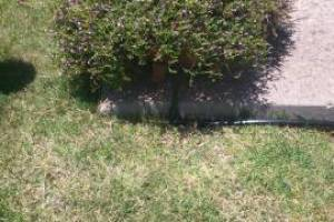 Landscaping Drip System Extension Repairs - Landscaping
