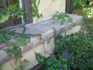 Stone and stucco ledge in front of window with vegetation growing in front