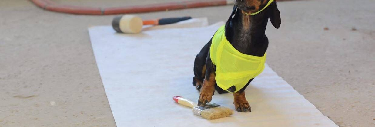 Can Wiener Dogs Be Trusted As Contractors