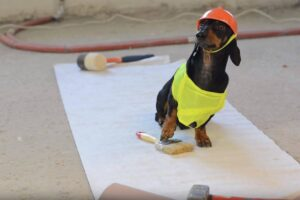 Can Wiener Dogs be trusted (as contractors)?