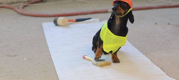 Dachshund in little safety vest and hard hat.