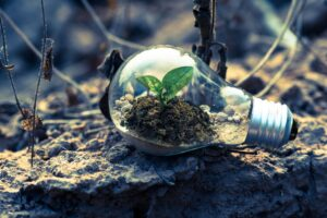 Lightbulb in dirt with plant growing inside of it